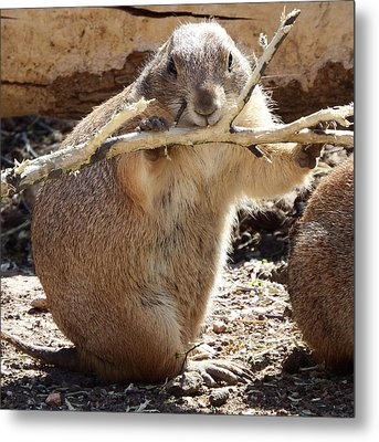 High Fiber Diet Metal Print by David G Paul