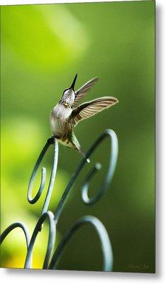 High Spirit Hummingbird Metal Print by Christina Rollo