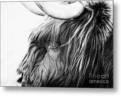 Highland Cow Mono Metal Print by John Farnan