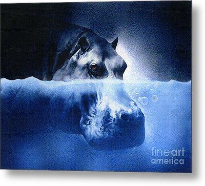 Hippo Metal Print by Robert Foster