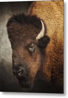 His Majesty Metal Print by Ron  McGinnis