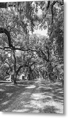 Historic Lane Bw Metal Print by Steve Harrington