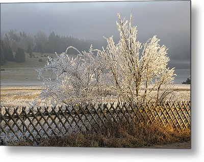 Hoarfrost In Winter Metal Print by Matthias Hauser