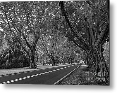 Hobe Sound Bridge Rd. West II Metal Print by Larry Nieland
