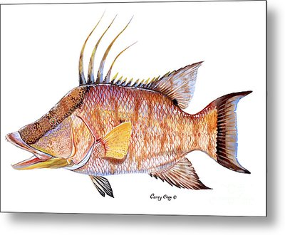 Hog Fish Metal Print by Carey Chen