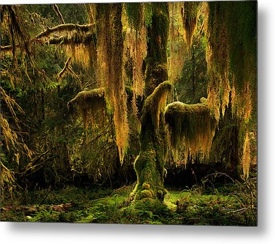Hoh Rain Forest Metal Print by Leland D Howard