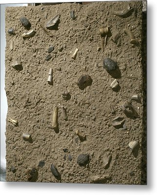 Homo Habilis Fossil Bed Metal Print by Science Photo Library
