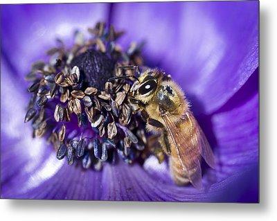 Honeybee And Anemone  Metal Print by Priya Ghose