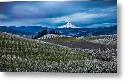 Hood River Orchard Sunrise Metal Print by Thorsten Scheuermann
