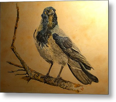 Hooded Crow Metal Print by Juan  Bosco