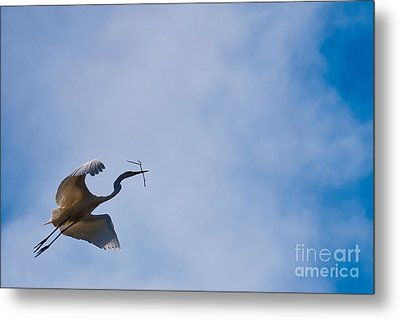 Hopeful Egret Building A Home  Metal Print by Terry Garvin
