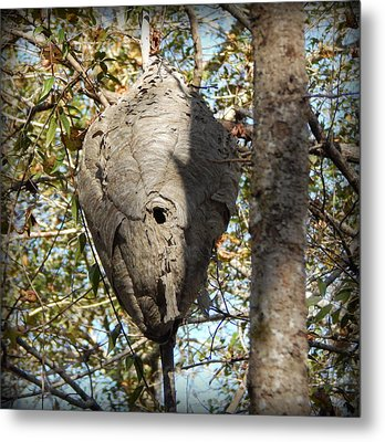Hornets Hive Metal Print by Lynn Griffin
