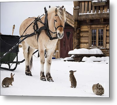 Horse And Rabbits Metal Print by Gry Thunes