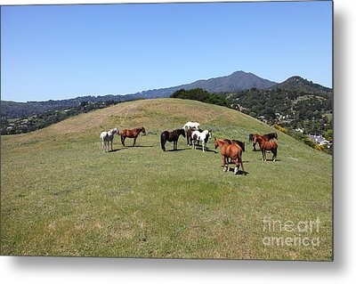 Horse Hill Mill Valley California 5d22673 Metal Print by Wingsdomain Art and Photography