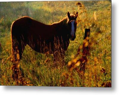 Horse Metal Print by Jim Vance