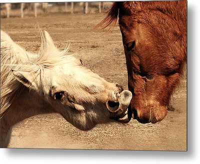 Horse Play Metal Print by Steven Milner