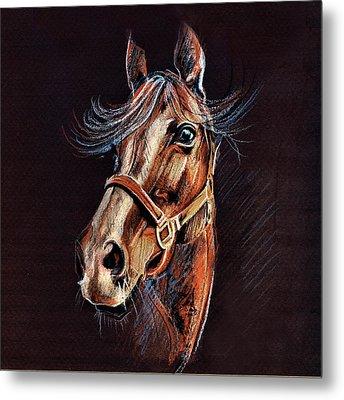 Horse Portrait  Metal Print by Daliana Pacuraru