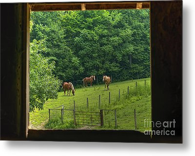 Horses Feeding In Field Metal Print by Dan Friend