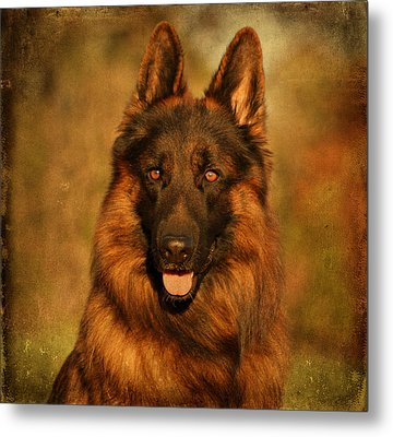 Hoss - German Shepherd Dog Metal Print by Sandy Keeton