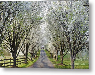 House At The End Of Pear Tree Lane Metal Print by Benanne Stiens