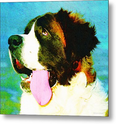 How Bout A Kiss - St Bernard Art By Sharon Cummings Metal Print by Sharon Cummings