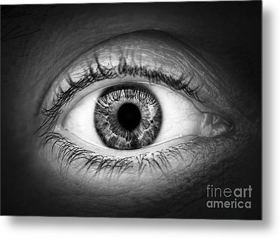 Human Eye Metal Print by Elena Elisseeva