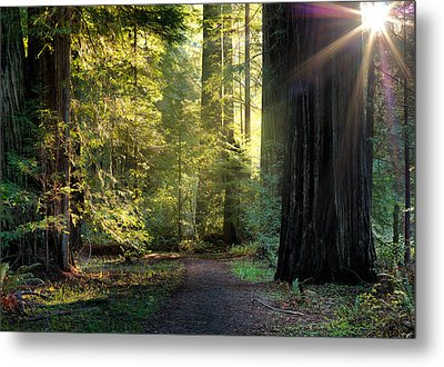 Humbolt Trail Metal Print by Leland D Howard