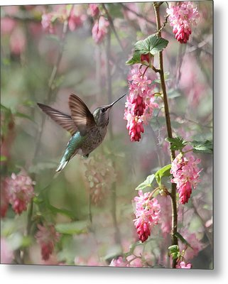 Hummingbird Heaven Metal Print by Angie Vogel