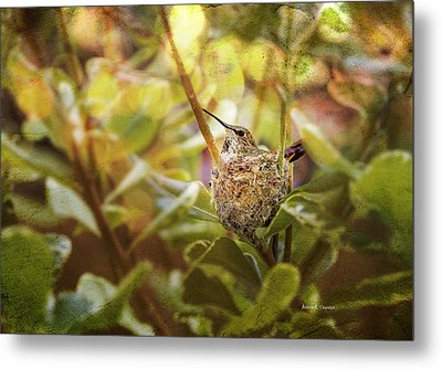 Hummingbird Mom In Nest Metal Print by Angela A Stanton