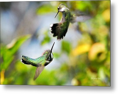 Hummingbirds Ensuing Battle Metal Print by Christina Rollo