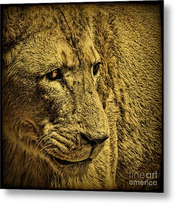 Hunter Metal Print by Andrew Paranavitana
