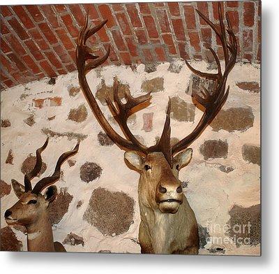 Hunting Trophys Metal Print by Rudi Prott