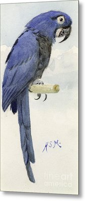 Hyacinth Macaw Metal Print by Henry Stacey Marks