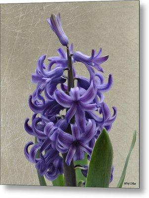 Hyacinth Purple Metal Print by Jeff Kolker