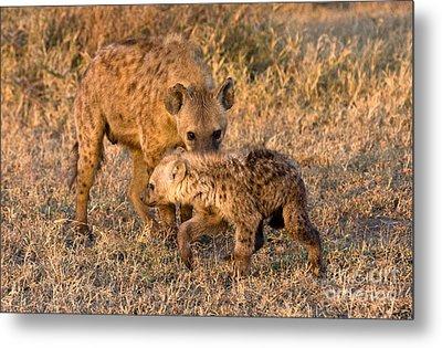 Hyena Mother And Cub Metal Print by Chris Scroggins
