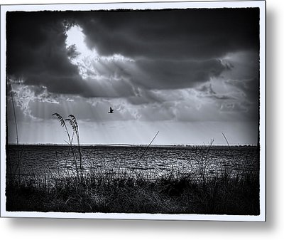 I Fly Away Metal Print by Marvin Spates