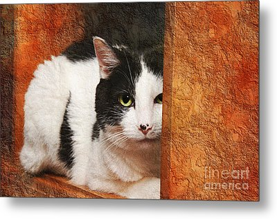 I Have My Eye On You Metal Print by Andee Design