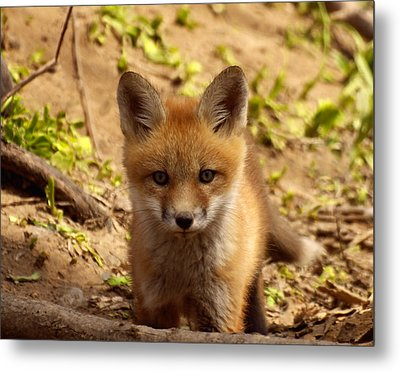 I See You Metal Print by Thomas Young