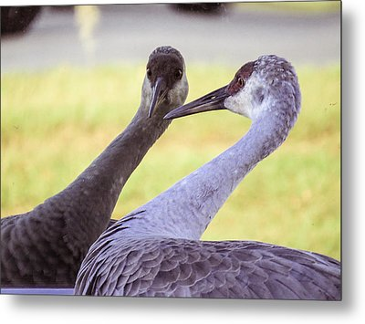 I See You Metal Print by Zina Stromberg