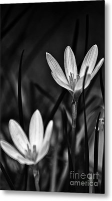 I Will Stand By You For Ever Metal Print by Vineesh Edakkara
