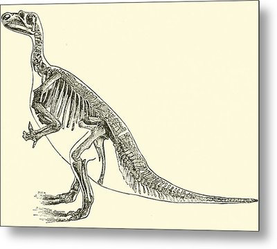 Iguanodon Metal Print by English School