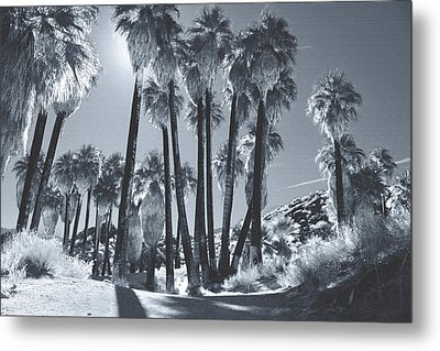 Illuminate Metal Print by Laurie Search