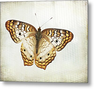 Illuminated Wings Metal Print by Lupen  Grainne
