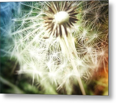 Illuminated Wishes Metal Print by Marianna Mills