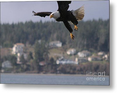 I'm Coming In For A Landing Metal Print by Kym Backland