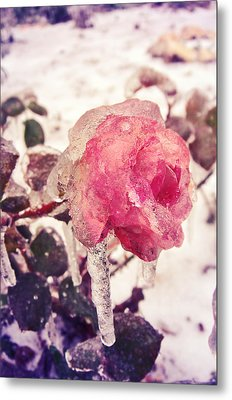 I'm Frozen.. Metal Print by Victoria  Kostova