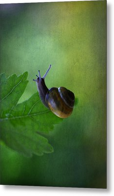 I'm Not So Fast Metal Print by Annie  Snel