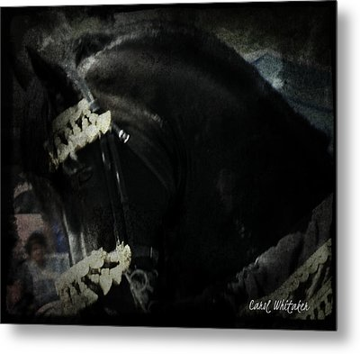 Imperial Friesian Metal Print by Royal Grove Fine Art