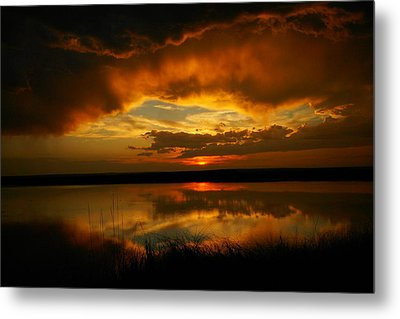 In All His Glory Metal Print by Jeff Swan