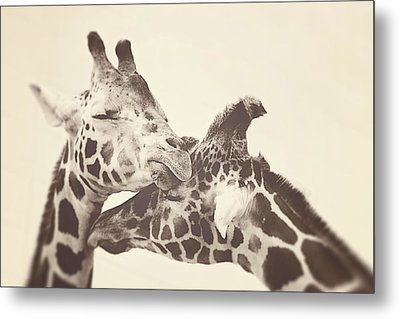 In Love Metal Print by Carrie Ann Grippo-Pike